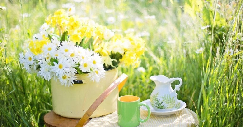 Green Tea Benefits For Brain